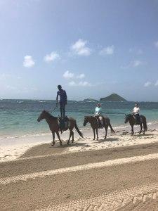 Horses at Coconut Bay Resort