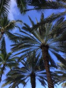 Blue Sky through Palm trees